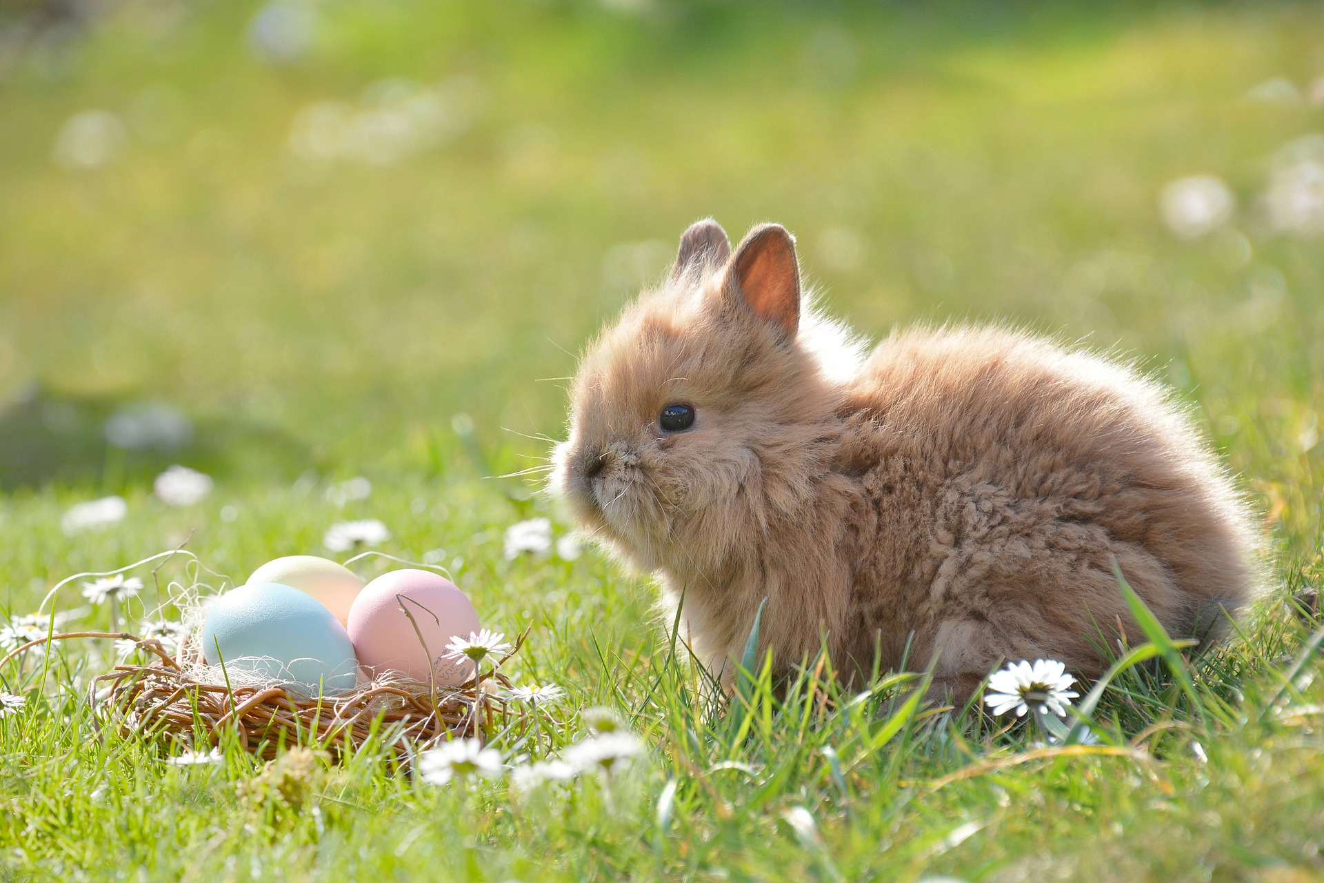 How to organise the best Easter Egg Hunt